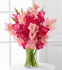 asda flowers Gladioluses