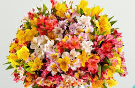 sainsburys flowers peruvian lilies