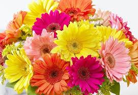 tesco flowers gerbera daisy