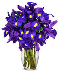 irisis flowers