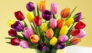 tulips flower delivery